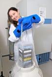 Cultura de congelação do tecido no nitrog líquido Foto de Stock