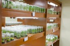 Cultura di tessuto vegetale Immagini Stock