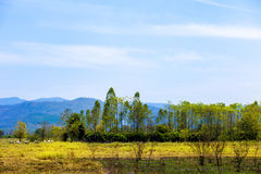 Cultura tradizionale di una certa area in Tailandia che ha molto bestiame Il bestiame del bestiame usato per andare sul campo di  Immagine Stock