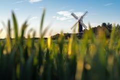 Culturas que crescem na frente de um moinho de vento Imagens de Stock