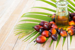 Culture commerciale d'huile de palme Puisque l'huile de palme contient plus de SA Image libre de droits