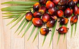 Culture commerciale d'huile de palme Puisque l'huile de palme contient plus de SA Photo libre de droits