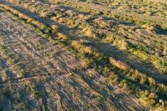 Culture de blé aplatie dans le domaine Photo stock