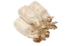 Culture de champignon, élevage frais de champignons d'huître Photos stock