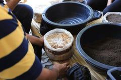 Culture de champignon en sachets en plastique et engrais de ver de terre dans la ferme images stock