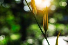 Culture de légumes avec le soleil de soirée Photo stock