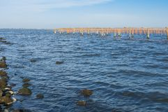 Culture de moule, à la lagune de Scardovari, Po& x27 ; delta de rivière, Adria photo libre de droits