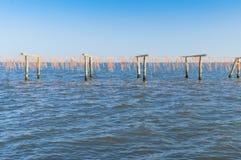 Culture de moule, à la lagune de Scardovari, Po& x27 ; delta de rivière, Adria photos stock