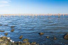 Culture de moule, à la lagune de Scardovari, Po& x27 ; delta de rivière, Adria image libre de droits