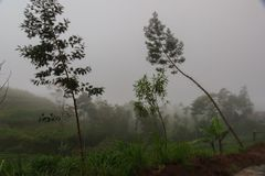 Culture de terrasse en montagnes Herbe verte fraîche photographie stock