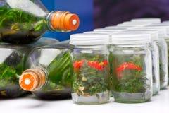 Culture de tissu végétal Images stock