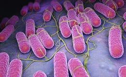 Culture des bactéries de salmonelles illustration libre de droits