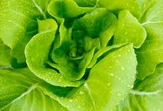Culture hydroponique végétale Image stock