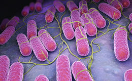 Culture of Salmonella bacteria. 3D illustration Stock Images