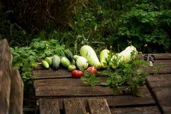 Culture végétale d'été frais sur le bois Image libre de droits