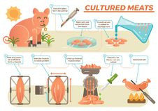 Cultured meat concept in illustrated steps. Showing process from taking real animal tissue, multiplying stem cells with adding serum, exercising muscle to boost Stock Image
