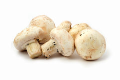 Cultured mushrooms. New and high quality images of cultured mushrooms,Culture mushroom, mushroom, food, food, mushrooms, useful, high quality, jpeg mushroom Royalty Free Stock Image
