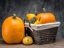 Cultures d'automne Photographie stock