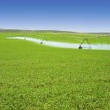 Cultures de ressort d'arrosage d'équipement d'irrigation dans le domaine vert de ferme Industrie agricole d'agriculture photo libre de droits