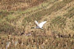 Cultures, jardin, arbres et oiseaux Image libre de droits