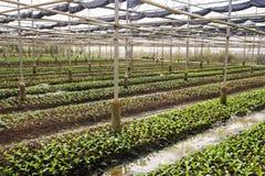 Cultures organiques fraîches Photo libre de droits