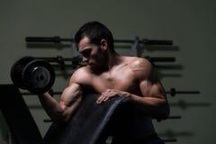 Culturista que ejercita el bíceps con pesas de gimnasia Foto de archivo