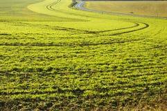 Cultuurlandschap. Royalty-vrije Stock Foto's