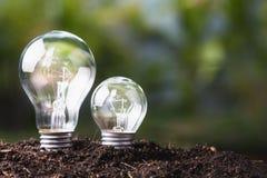 Cultvio de bulbos grande y pequeño Fotografía de archivo