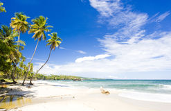 Cumana Bay. In island of Trinidad Royalty Free Stock Photo