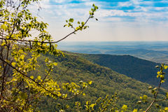 Cumberland Mountains. View of Cumberland Mountains and valley from overlook at Frozen Head State Park Stock Photo
