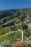 Cumbre-Berge, La Palma, Kanarische Inseln Lizenzfreie Stockfotografie
