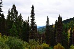 Cumbre Boise National Forest de la montaña de los usos Foto de archivo libre de regalías