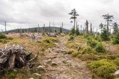 Cumbre de la colina con el prado de la montaña, los árboles aislados y la pista de senderismo Imagen de archivo libre de regalías