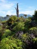 Cumbre de la montaña, Malasia Foto de archivo libre de regalías