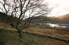 Cumbria. England Cumbria Thirlmere reservoir with tree in winter Stock Images