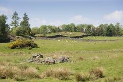 Cumbria-Feld mit Trockenmauern Stockfoto