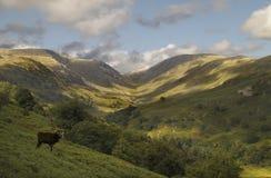 Cumbrian Hills Stock Images