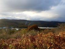 cumbrian krajobrazu Zdjęcie Royalty Free