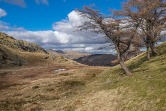 Cumbrian landscape. Looking towards the Langdales Cumbria England Royalty Free Stock Photo