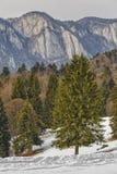 Cume das montanhas de Postavaru Fotos de Stock Royalty Free