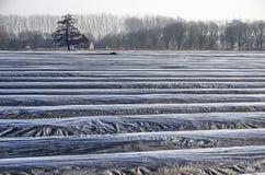 Cumes recobertos de plástico em um campo do aspargo foto de stock