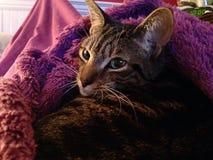 Cumfy cat Stock Images