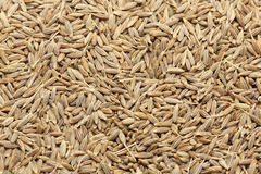 Cumin Royalty Free Stock Image