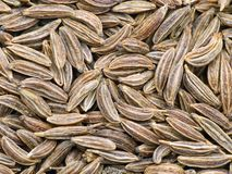 Cumin Photos stock