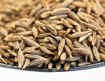 Cumin Royalty Free Stock Photography