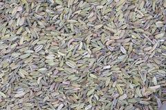 Cumin. The background of cumin seeds Royalty Free Stock Photos