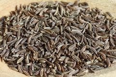 Cumin. Close up of dried cumin laid on spoon Royalty Free Stock Images