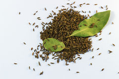 Cumin and bay leaf Stock Images