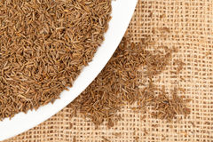 Cumin or caraway seeds Royalty Free Stock Photography
