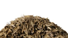 Cumin or caraway seeds falling and piling up isolated on white stock video footage